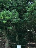 Female Tree at Bird City