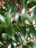 Closeup of foliage